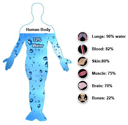 human-body-water
