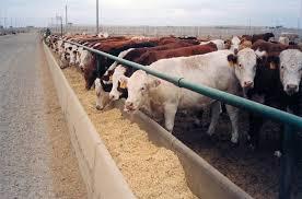 livestock.jpeg