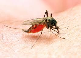 malaria.jpeg